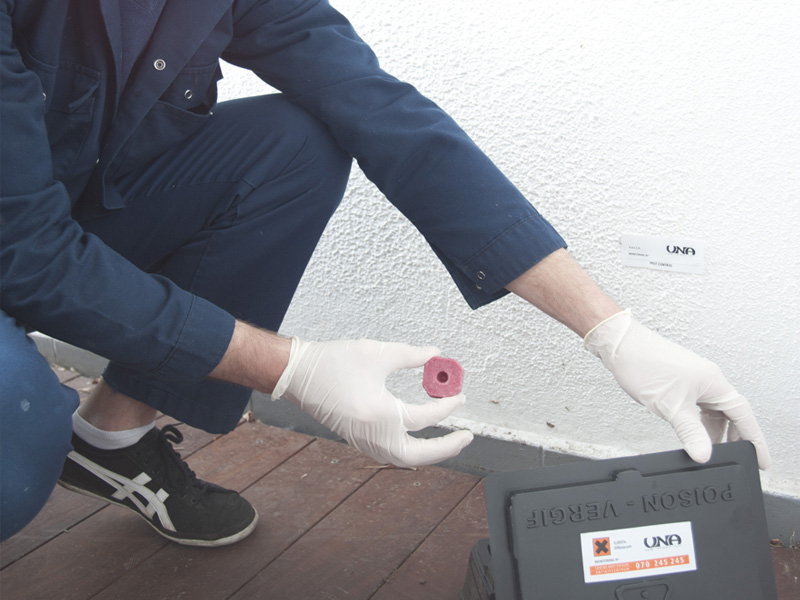 monitoring-de-controle-contre-les-rats